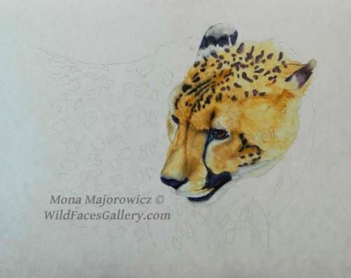 CheetahWip2-800