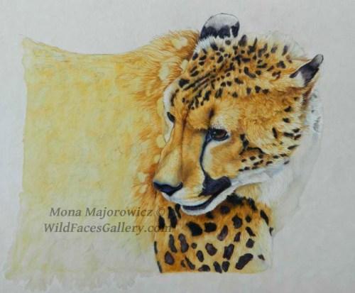 CheetahWip3-800