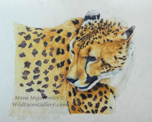 CheetahWip4-800