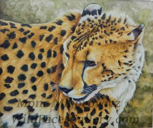 CheetahWip5-800