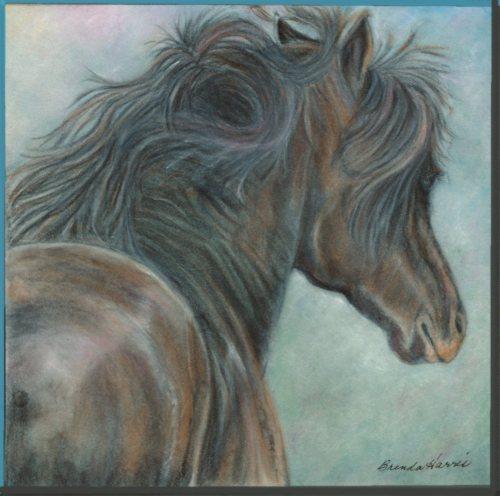 Brenda_Haris___horse_project