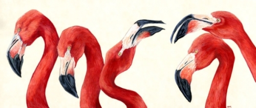 FlamingosBi